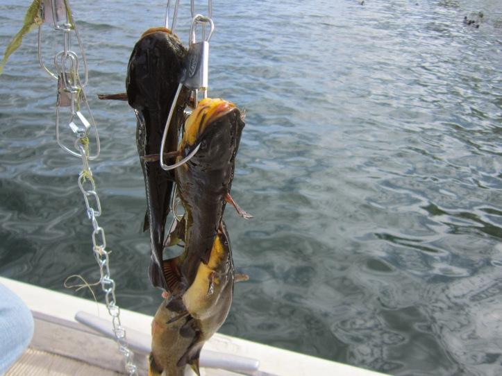 OCT 2013 fishing 091