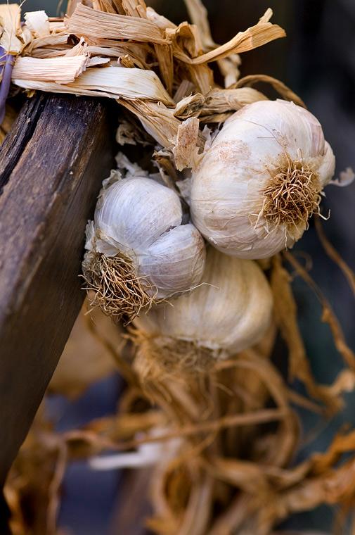 wpid-garlic_by_rscorp.jpeg