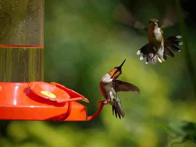 Watch Good Morning Hummingbird On Youtube Dawns Ad Lib