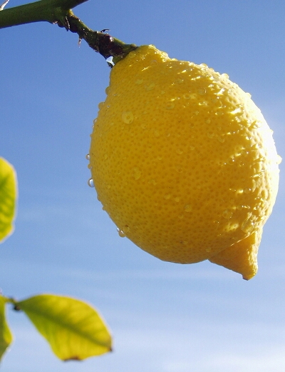 wpid-wpid-california_lemon-1