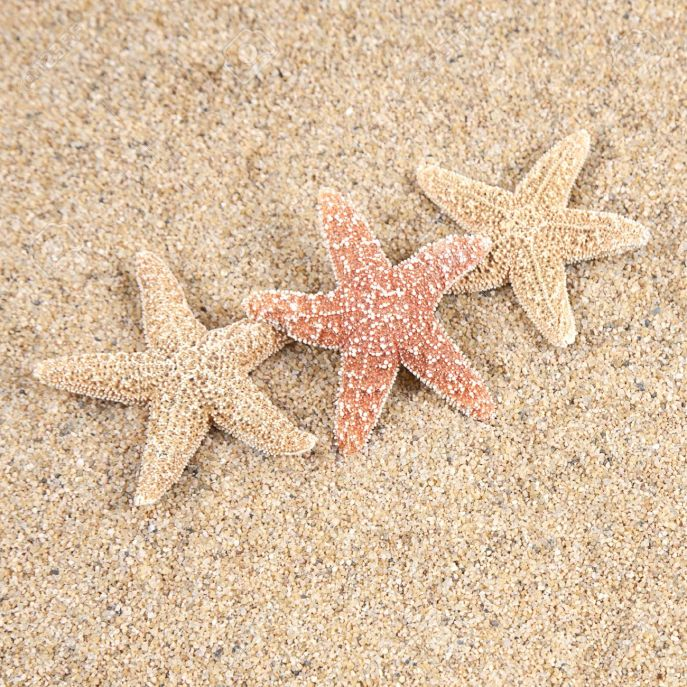 8991125-starfish-in-the-beach-sand-copy-space-stock-photo-summer